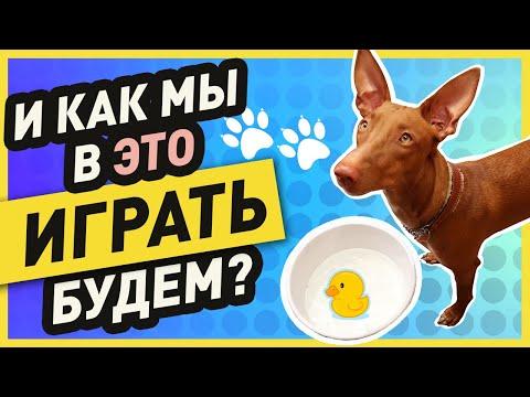 Вопрос: Как развлечь собаку?