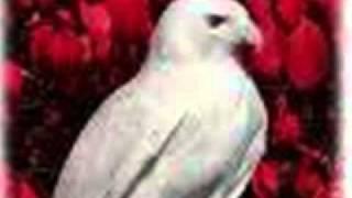 Albino Animal Tribute Thumbnail