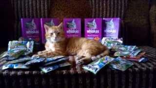 Жизнь удалась или как живут простые украинские коты...   As lives simple Ukrainian cats...