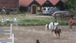 Драка лошадей