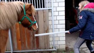 10 Arten von Reitern+Outtakes