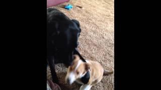 「あなたの仲良しはだあれ?」と聞かれた時の犬の反応がキュンかわ