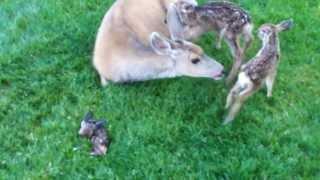 Deer Triplets - I