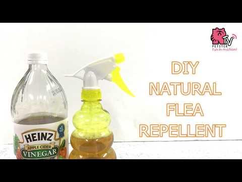 diy-flea-repellent-(with-apple-cider-vinegar)
