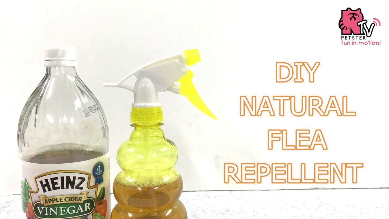 DIY FLEA REPELLENT (WITH APPLE CIDER