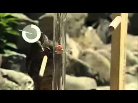 Bird Intelligence  The New Zealand Kea
