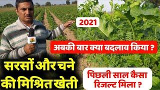 सरसों के साथ चने की खेती   पिछले साल कैसा रिजल्ट मिला   अबकी बार क्या बदलाव किया   Sarso Ki Kheti
