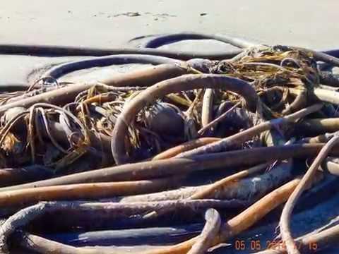 Wild Rivers Coast Brookings Harbor Oregon