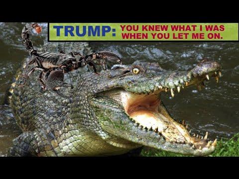 why-i-won-t-vote-for-donald-trump-or-joe-biden!