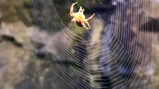 24  Spider HD 720p