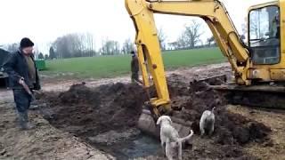 Уничтожение вредителей,собаки ловят крыс