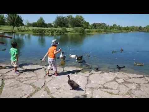 Mueller Lake Park Austin - Duck Feeding & Playground Fun (4K)