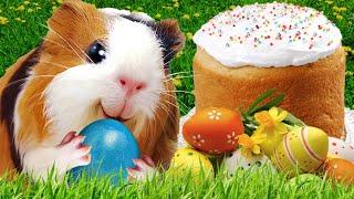 Красим Яйца на Пасху Праздник со Свинкой Блогером Эксперименты с Едой