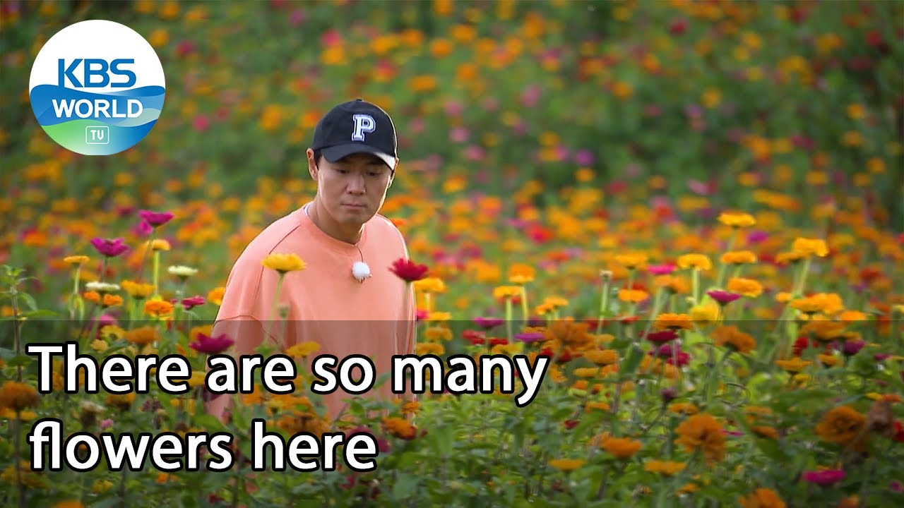 Download There are so many flowers here (2 Days & 1 Night Season 4 Ep.95-2) | KBS WORLD TV 211017