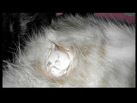 Mommy cat 🐈 breastfeeding her kitten