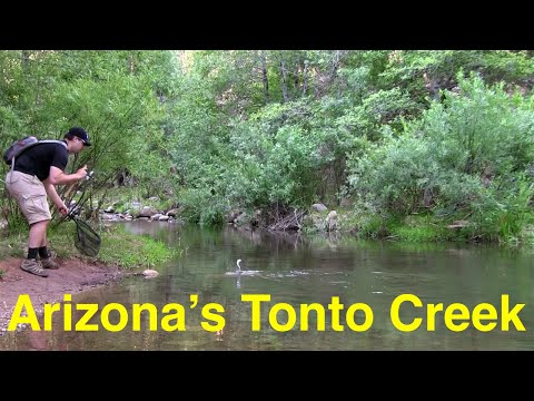 Tonto Creek Trout Fishing