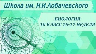Биология 10 класс 16-17 неделя ДНК носитель наследственности. Биосинтез белка