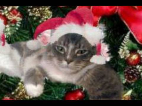 cat sings we wish you a merry christmas - Merry Christmas Cat