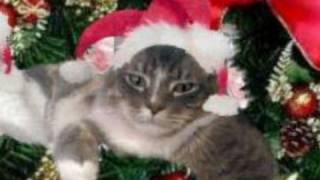 Cat sings