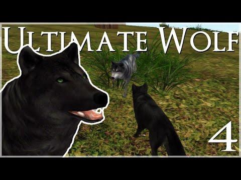 wolf simulator - cinemapichollu