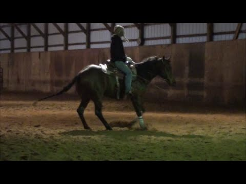 sold needas chic 2011 mare by chic please youtube