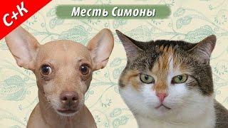 Месть Симоны - кошки против собак.