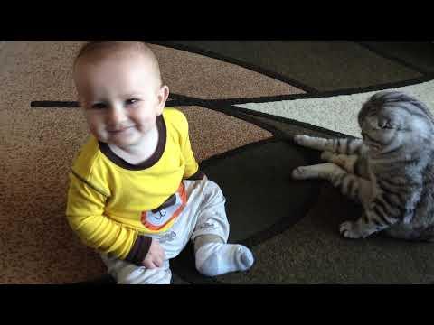 Our Scottish Fold Cat Male Markiz loves kids