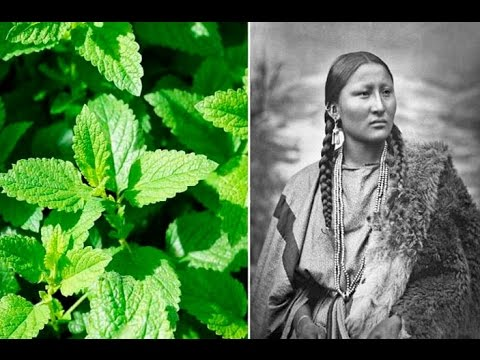 6 Plants Native Americans Use To Cure Everything