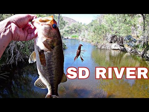 Catching Bass And Carp At The San Diego River (creek Fishing)