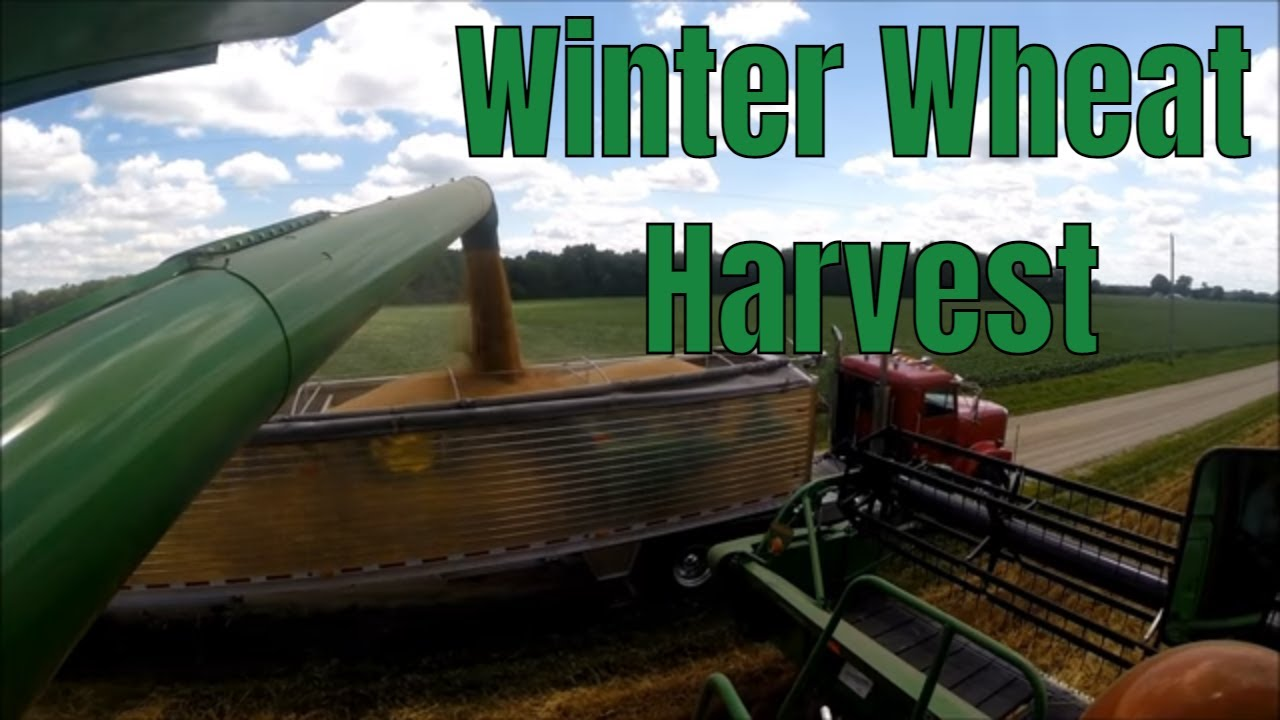 Wheat Harvest 2014 - YouTube
