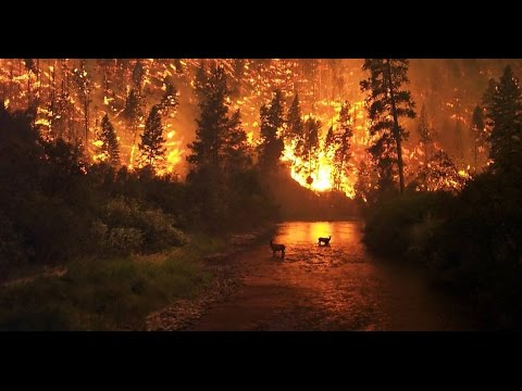 WOW! Look what they just found in Tennessee Wildfires!