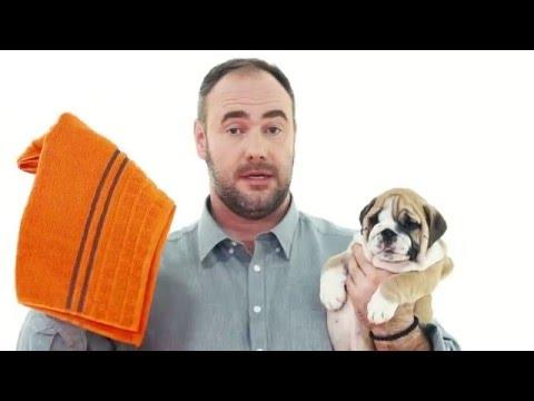 Уход за собакой и щенком | Elli Di собаки
