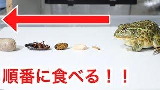 カエルに色んな餌を順番にあげた結果…かわいすぎた… thumbnail