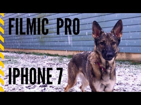 LumaFusion and Filmic pro for iPhone 7 : German Shepherd in snow HD