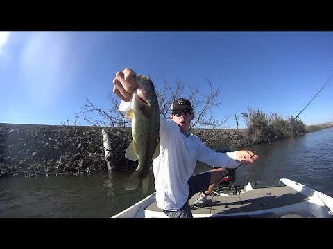 California Delta Wacky Rig Bassin' | No. 8 Rod; Shimano Reel Combo Review