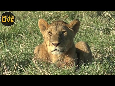 safariLIVE - Sunrise Safari - September 24, 2018