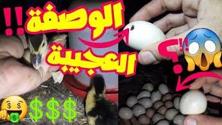 المكون السحري في فقس بيض البط لماذا نقوم برش بيض البط قبل الفقس بخمسه ايام بالماء الحار