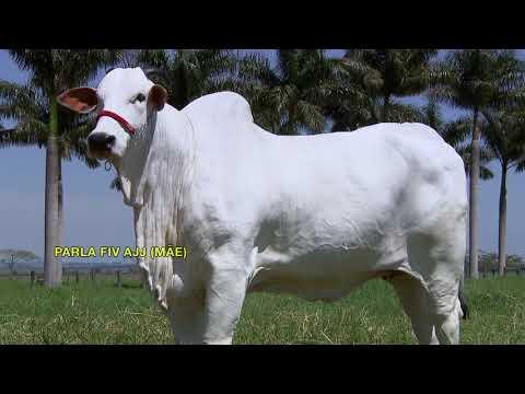 Lote 32   Surya FIV LUC 2L   PRI 2840