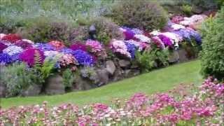 Покровные растения для цветников.