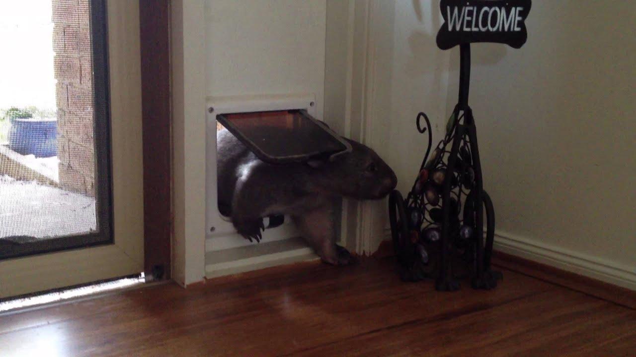 Cat Door Keep Dog Out