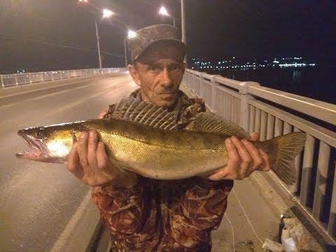 Ловля с моста трофейной рыбы. Ловля судака.
