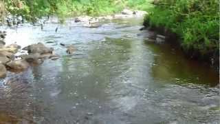 Лісова річка в Новгородській області