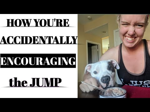 HOW TO STOP DOG COUNTER SURFING & WHY CONTRA-FREELOADING IS CAUSING THE JUMP