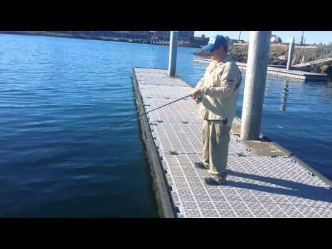 Geelong Ifish Ufish Tv