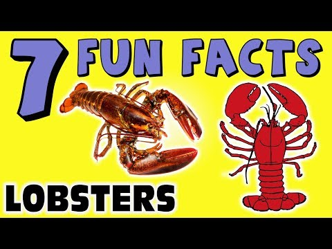 7 FUN FACTS ABOUT LOBSTERS! LOBSTER FACTS FOR KIDS! Ocean! Sea Life! Learning Colors Fun Sock Puppet