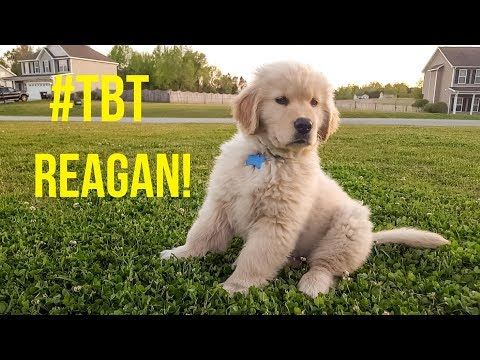 #TBT PUPPY REAGAN | Oshies World
