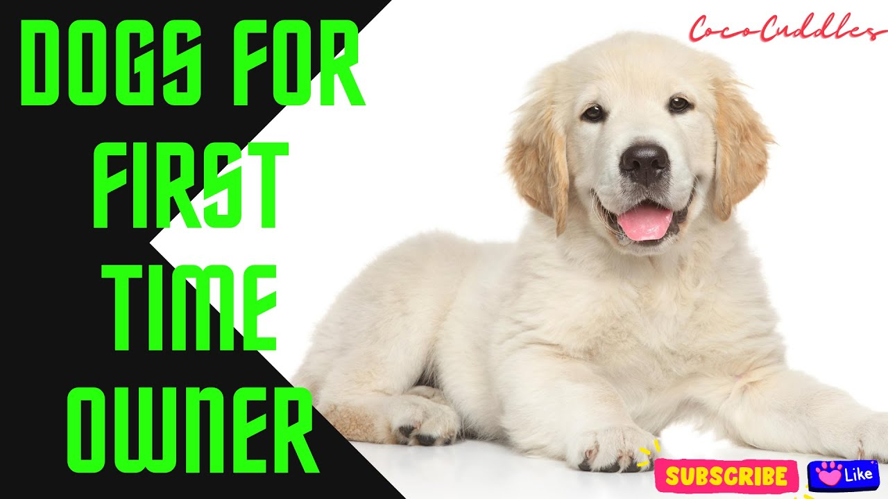 Top 10 Dogs Breed For First Time Owners | Beginners Dogs