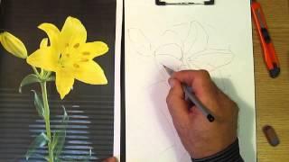 Как рисовать лилию. Часть 1. Урок 28. How to draw a lily. Lesson 28(В данном уроке научимся, как рисовать лилию (how to draw a lily): как рисовать лепестки лилии, как рисовать бутон..., 2013-09-14T11:50:02.000Z)