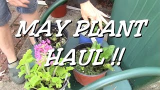 May Garden Plant Haul ! Flowers & edibles