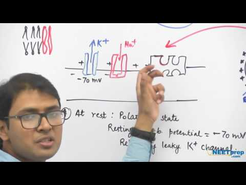 #3 | Nerve Impulse | Neural Control & Coordination | Dr  Rajeev Ranjan